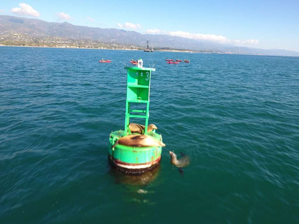 Sea Lions hanging out on a buoy
